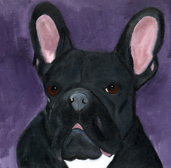 Blackfrenchie
